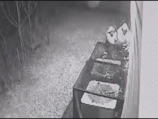 robbers stealing A/C, home surveillance camera